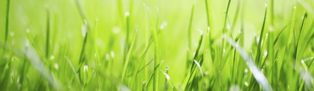 green grass page